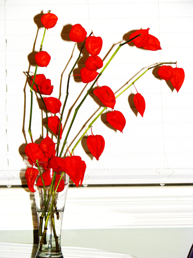 beautiful flowers roses red. Chinese red lanterns